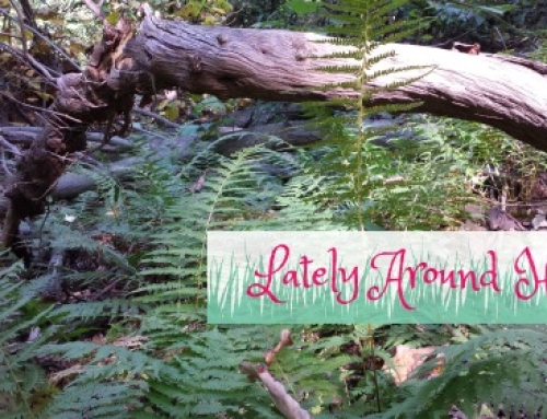 Lately Around Here: Adventures In The City + Nature
